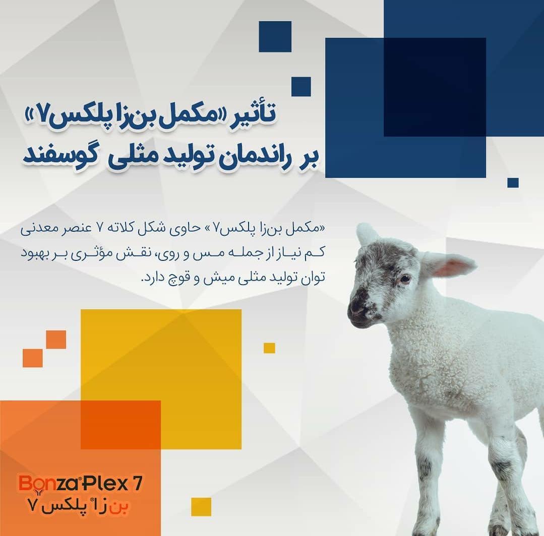 تاثیر مکمل بن زا پلکس 7 بر راندمان تولید مثلی گوسفند