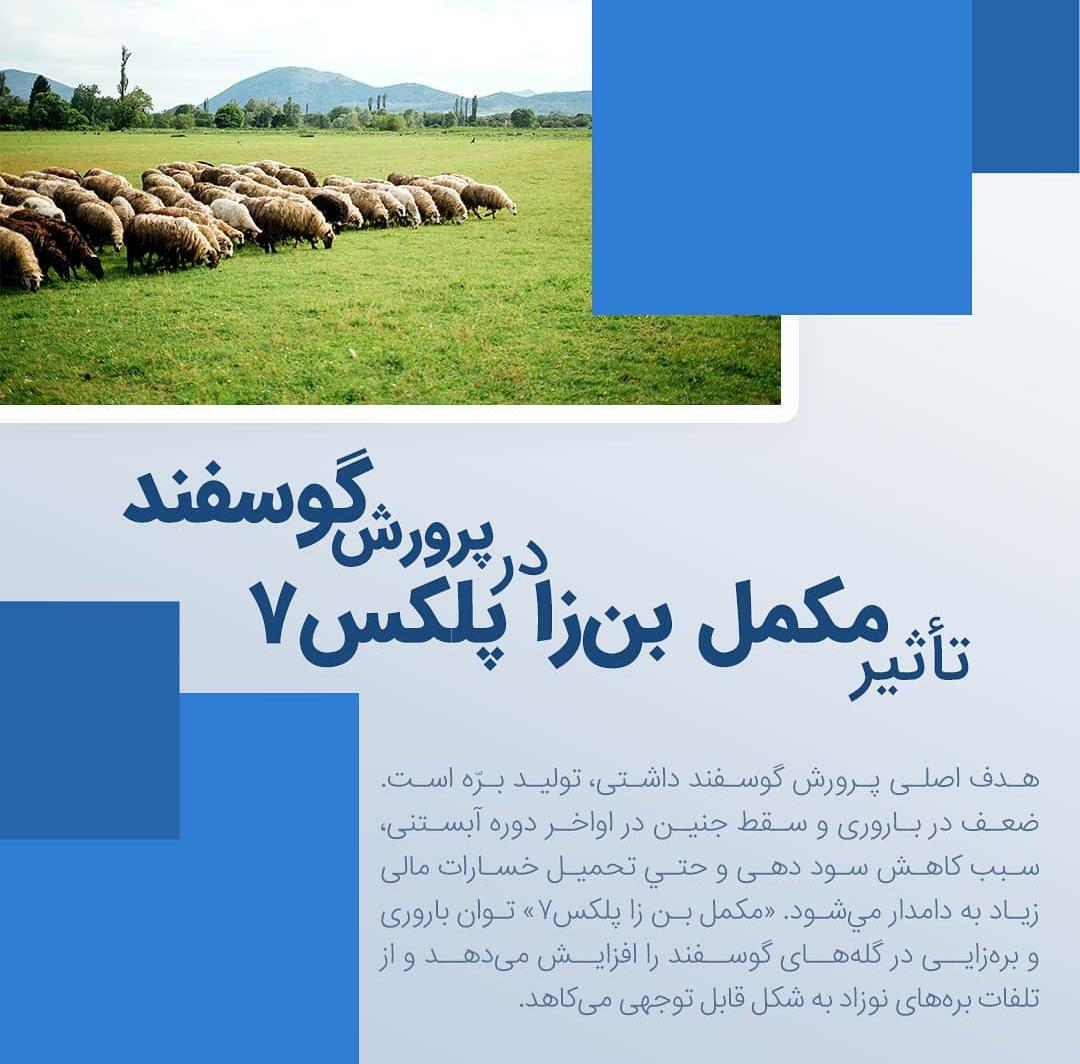 تاثیر مکمل بن زا کمپلکس 7 در پرورش گوسفند